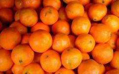 Citrus Harvest Festival Highland California