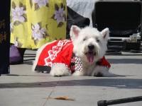 Nisei Week Little Tokyo Los Angeles