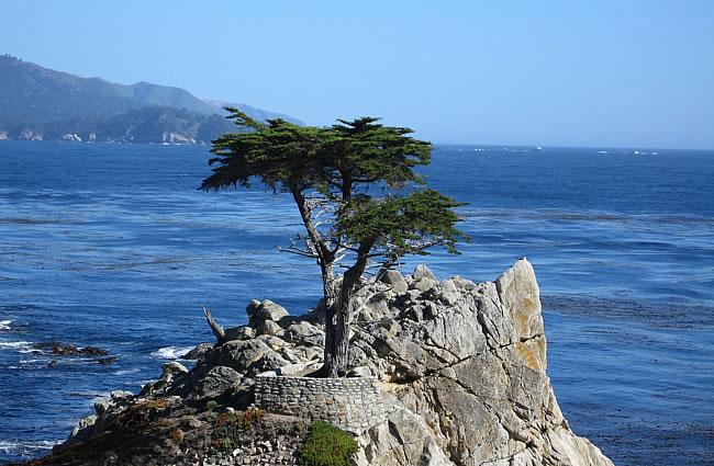 Monterey Bay Day Trip