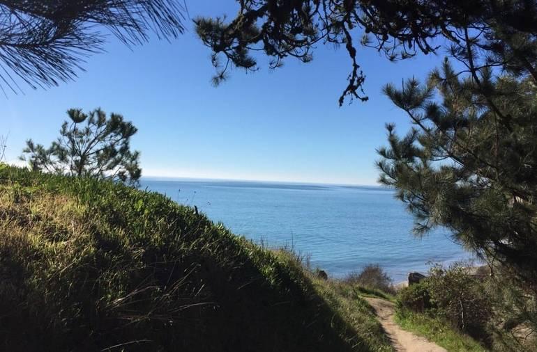New Brighton State beach Bluff Trail