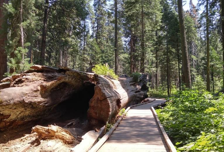 Calaveras Big Trees State Park Day Trip