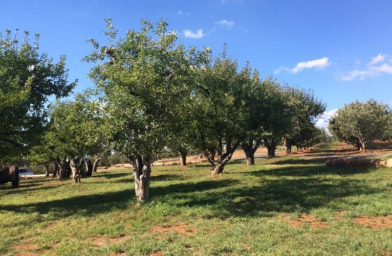 Apple Hill U-Pick Apples El Dorado County