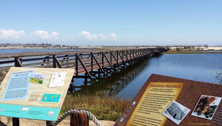 Bolsa Chica Wetlands Orange County Day Trip