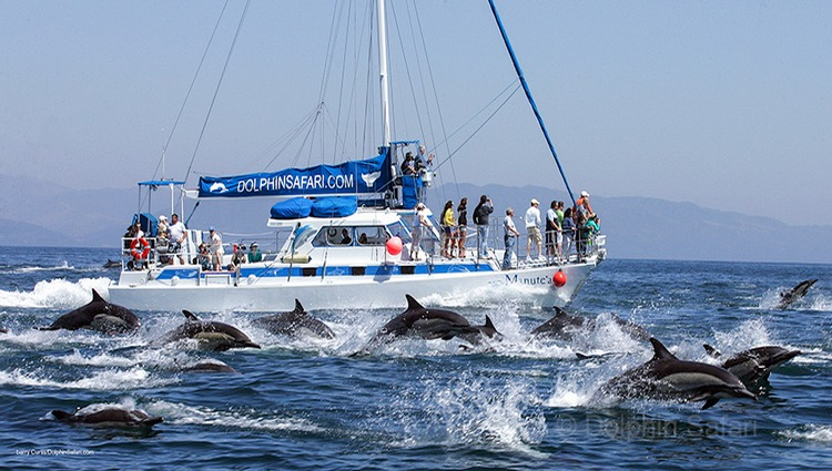 Captain Dave's Dana Point Whale Watching