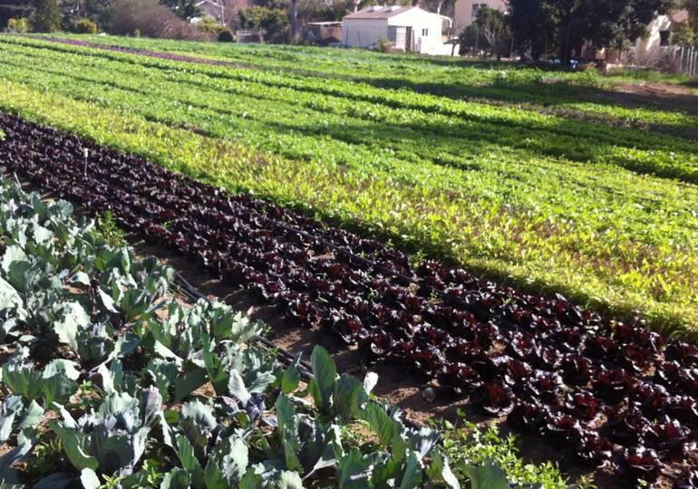 Fairview Gardens Goleta California
