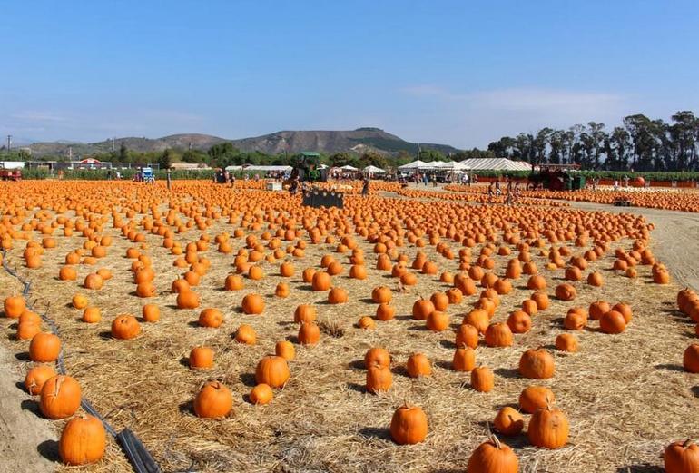 Farms Fall Festival