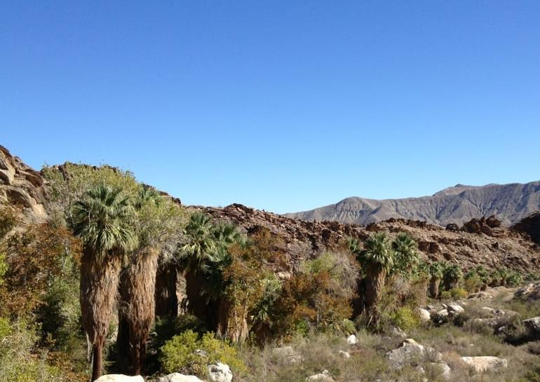 Indian Canyons Day Trip