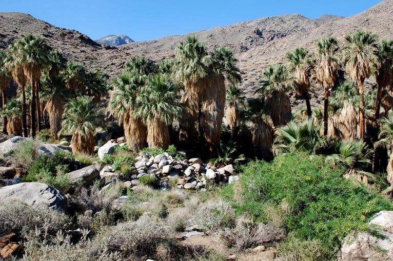 Indian Canyons Palm Springs