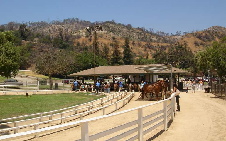Griffith Park Pony Rides