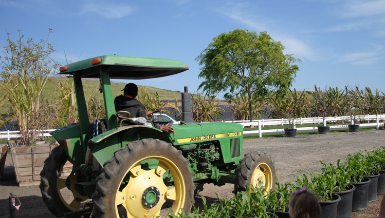 Tanaka Farms U-Pick Tours Irvine Day Trip