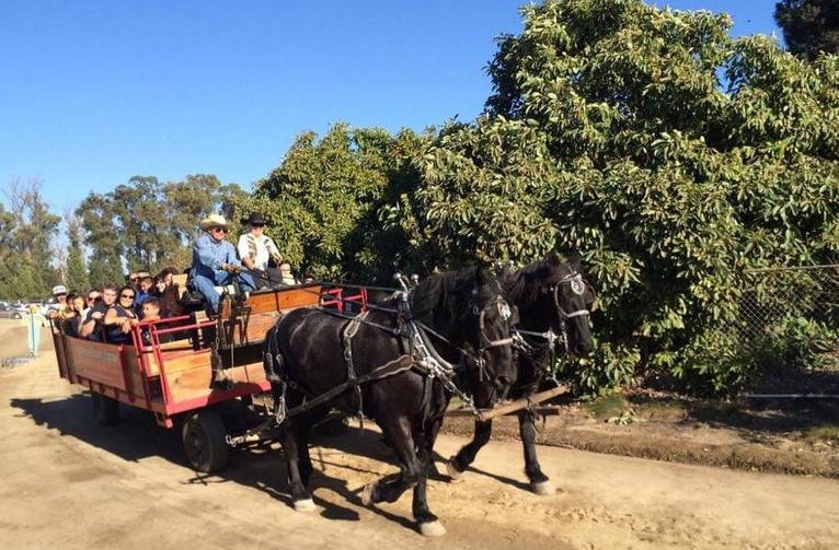 Underwood Family Farms Day Trip Moorpark