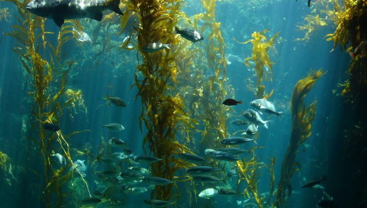 Birch Aquarium La Jolla