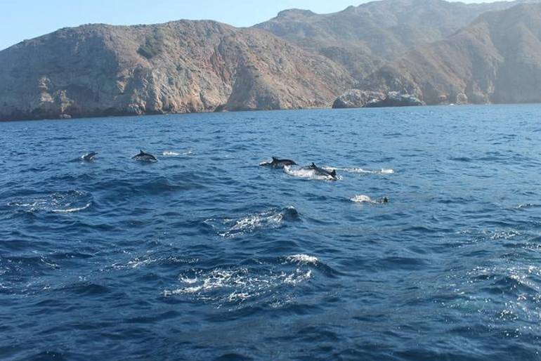 Island Packers Whale Watching Cruises to Channel Islands