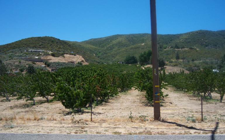 Leona Valley Cherry Picking