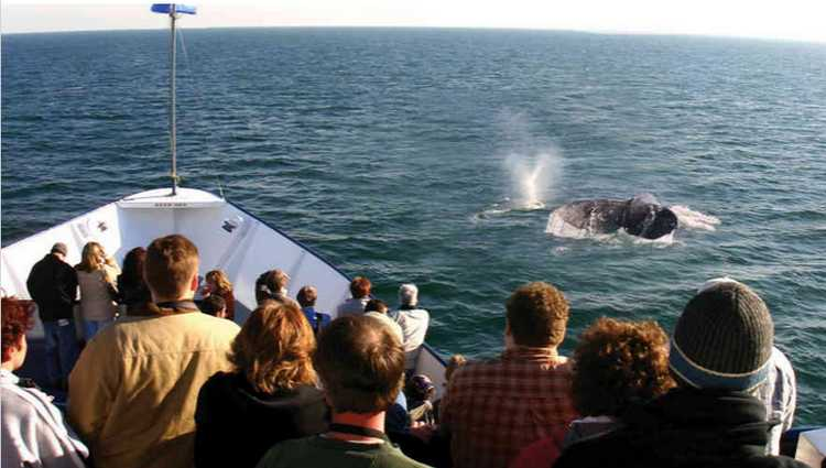 Whale Watching San Diego Hornblower Cruises 50% Off