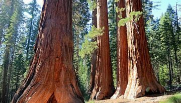 One Day in Sequoia Kings Canyon Parks