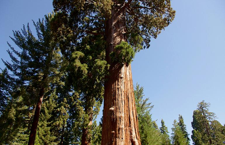 Sequoia-Kings Canyon Park