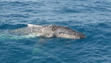 Southern California Whale Watching