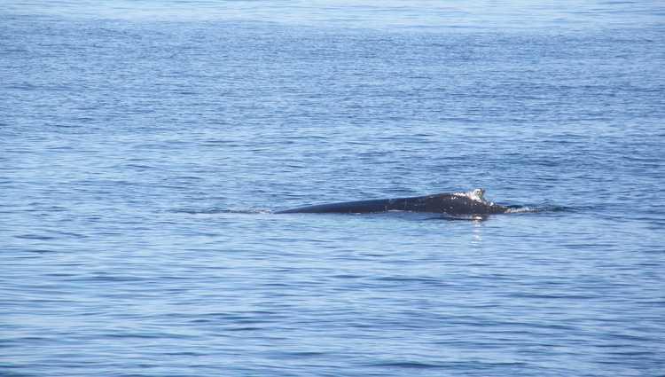 Whale Watching Dana Point