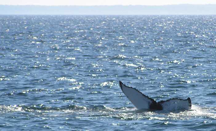 Whale Watching San Diego