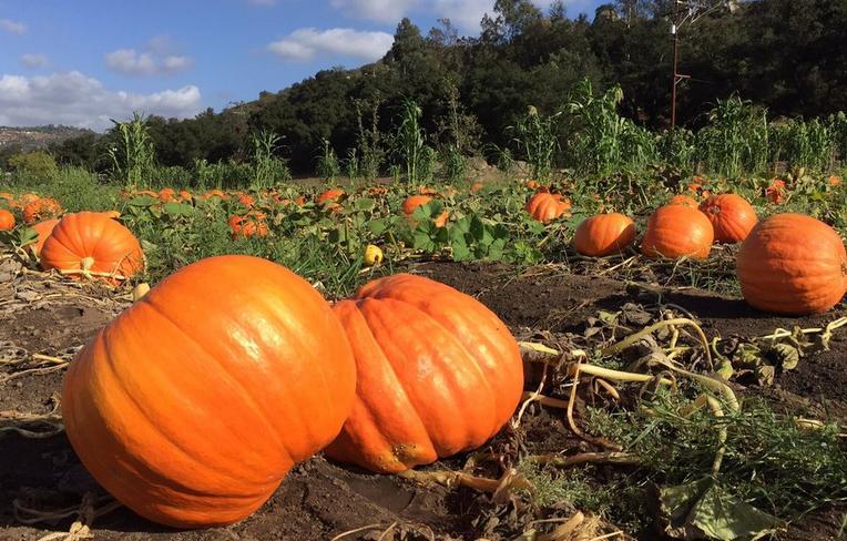 Farm Pumpkin Patch