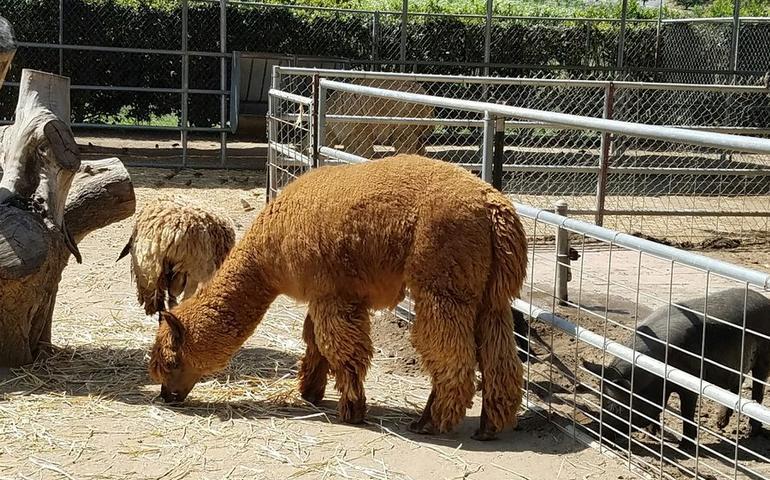Farm Petting Zoo