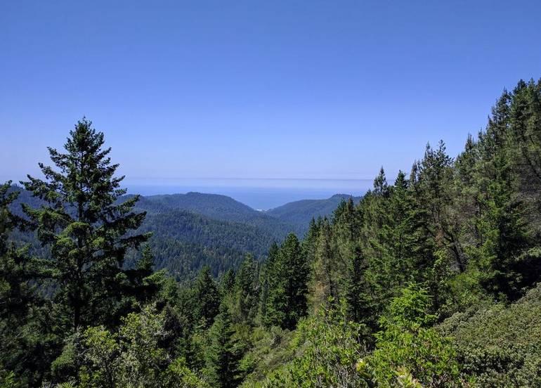 Big Basin Redwoods State Park Day Trip
