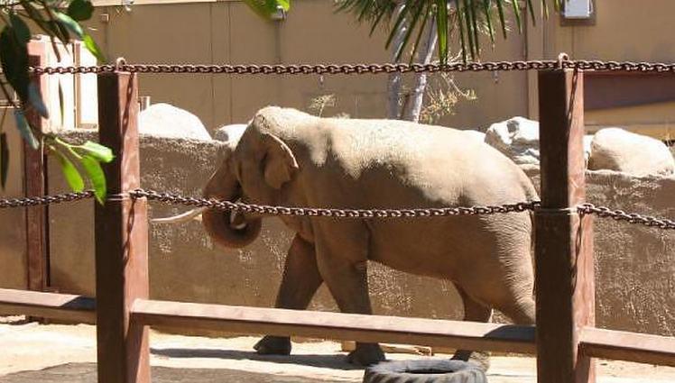 Los Angeles Zoo Elephant of Asia exhibit