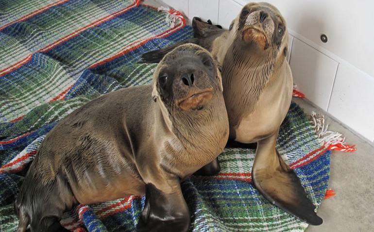 Pacific Marine Mammal Center Laguna Beach