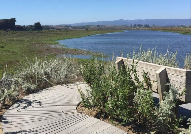 Pajaro River Wetlands
