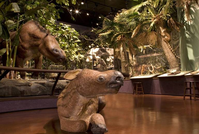 Balboa Park Natural History Museum