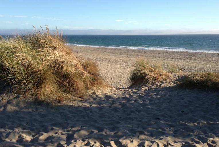 Sunset State Beach Sand Dunes