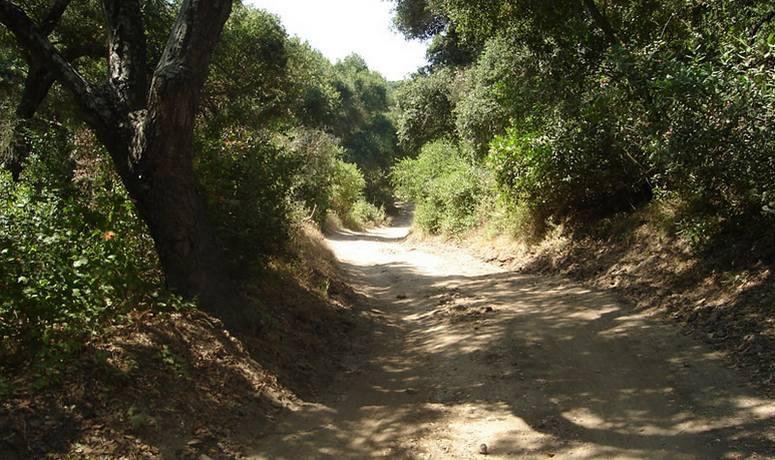 Wood Canyon Trail