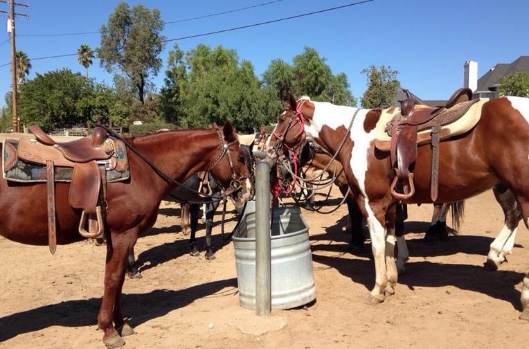 Temecula Horseback Riding Wne Tours
