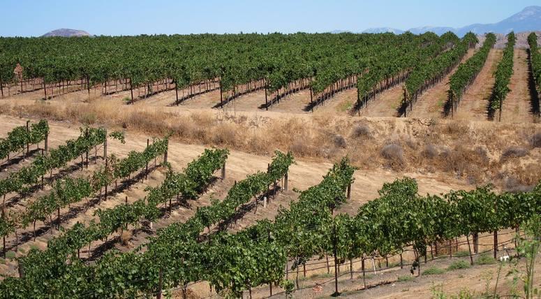 Falkner Winery Vineyard