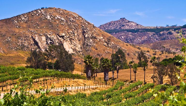 Orfila Vineyards & Winery Escondido Day Trip
