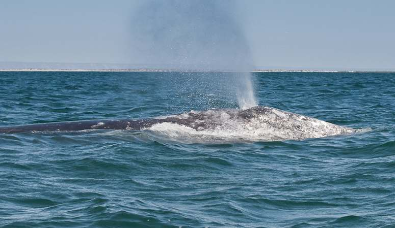 H & M San Diego Whale Watching Trips