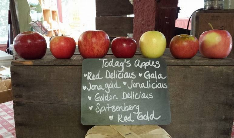 Following the Avila Apple Trail in Scenic See Canyon