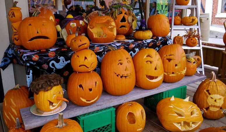 Halloween Pumpkins Knotts