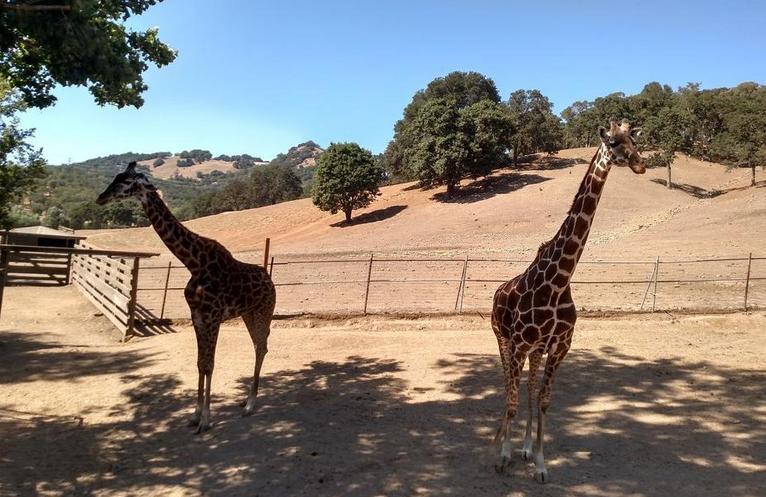 Safari West Santa Rosa