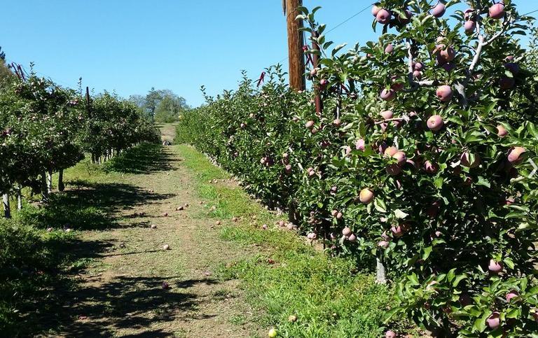 Julian U-Pick Apple Farm