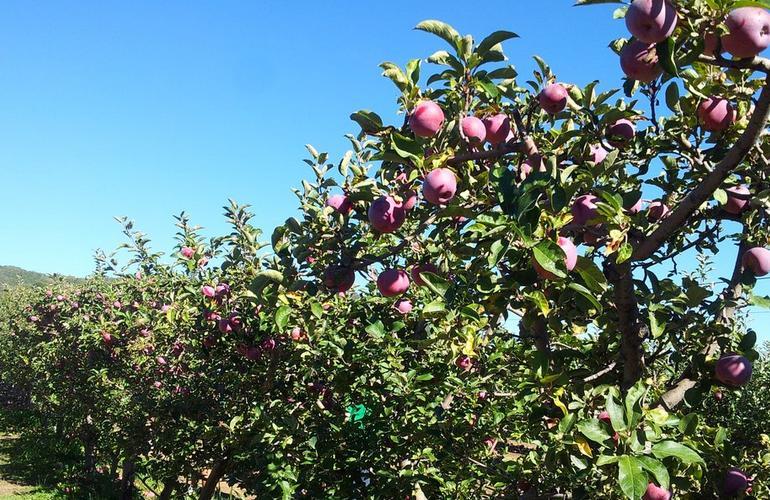 Julian Apple Farm