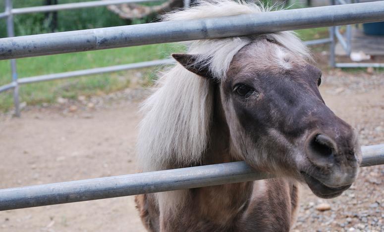 Folsom City Zoo Sanctuary Day Trip