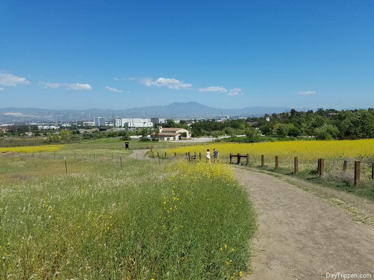 View South toward Shady Canyon Road