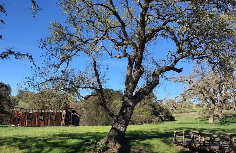 Santa Ynez Valley Day Trip