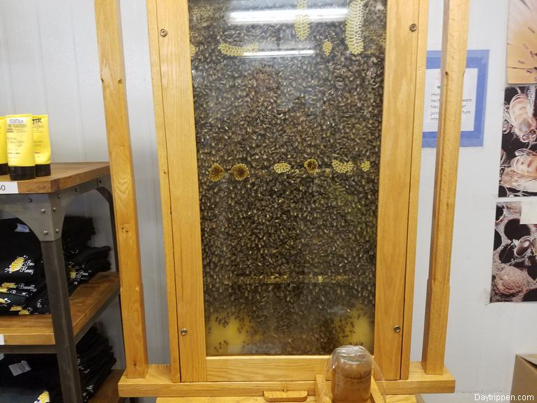 Bee Hive in Store