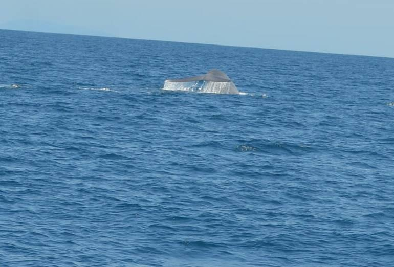 Harbor Breeze Whale Watching Long Beach CA