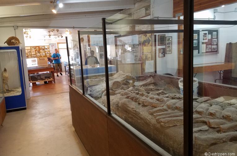 Shoshone Museum