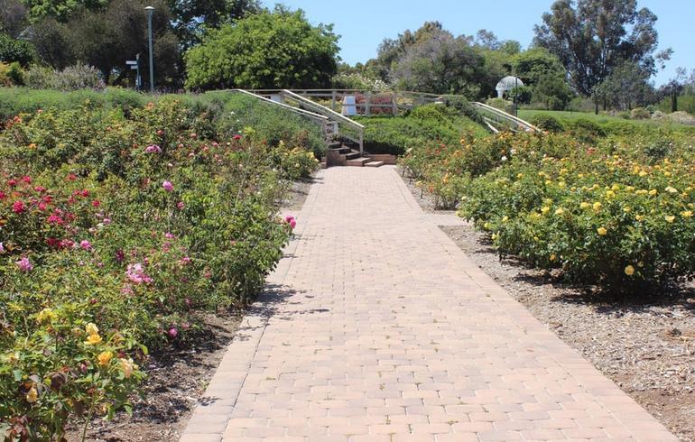 South Coast Botanic Garden Rose Garden