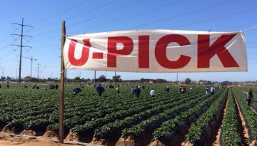 Southern California U-Pick Farms, Orchards & Tours